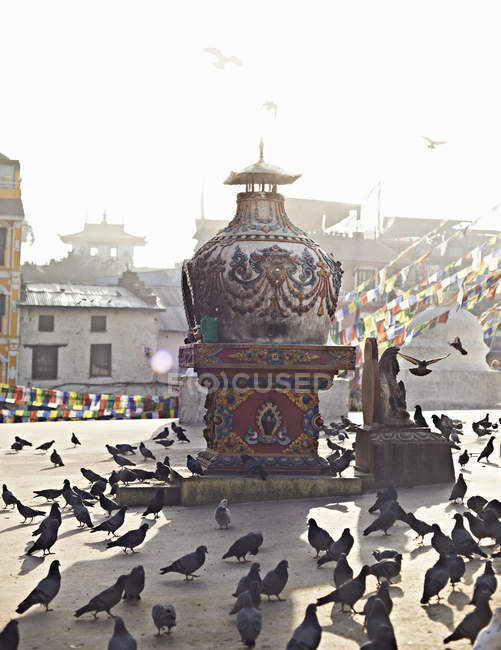 Flock of pigeons and stupa — Stock Photo