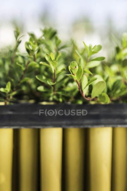 Nahaufnahme von Reihen von Setzling Pflanzen Pflanze Wachstum Forschung Zentrum Gewächshaus — Stockfoto