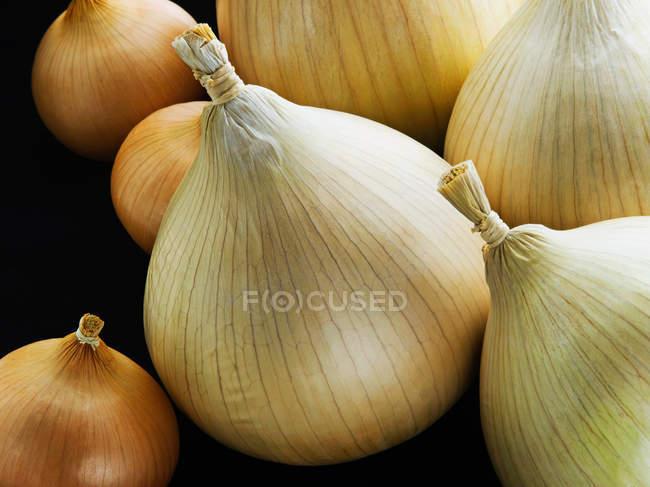 Pilha de cebola diferente — Fotografia de Stock