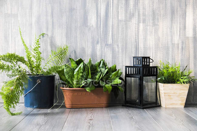 Row of potted plants with lamp on grey wooden floor — Stock Photo