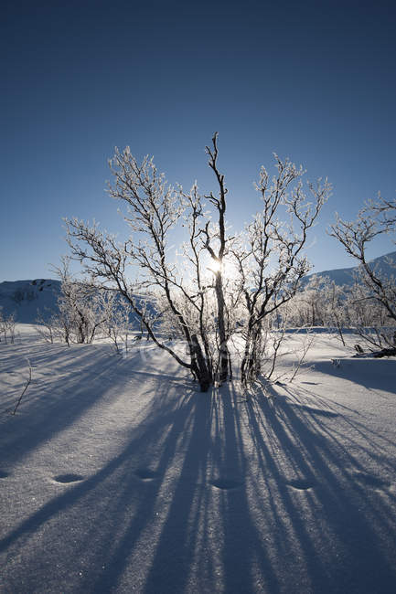 Paesaggio ghiacciato vicino a Kiruna — Foto stock
