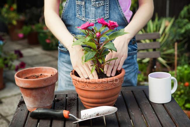 Weibliche Hände umtopfende Pflanze — Stockfoto