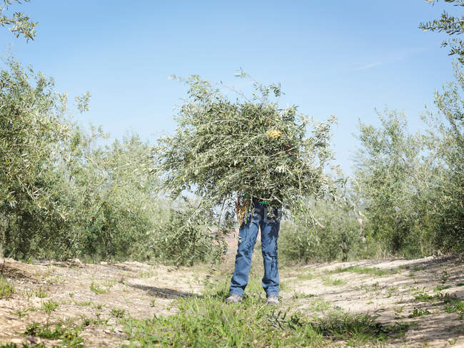 Low angle view of boy holding bunch of olive tree branches — Stock Photo