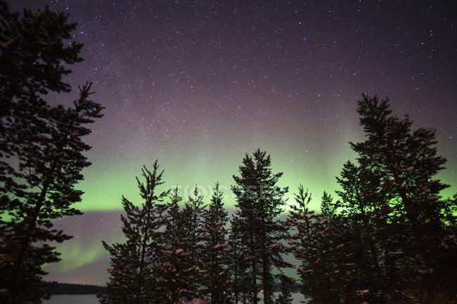Siluetas de árboles de pino con aurora boreal iluminan el cielo - foto de stock