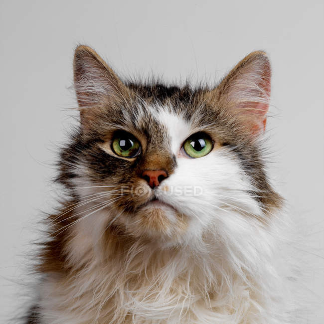 Cat face on white — Stock Photo
