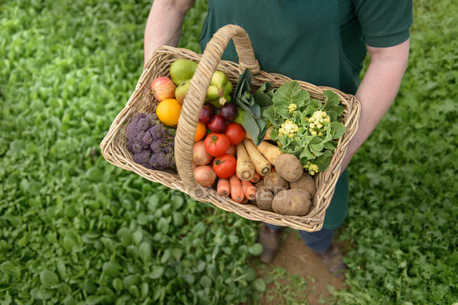 Farmer carrying organic vegetables in box — Stock Photo
