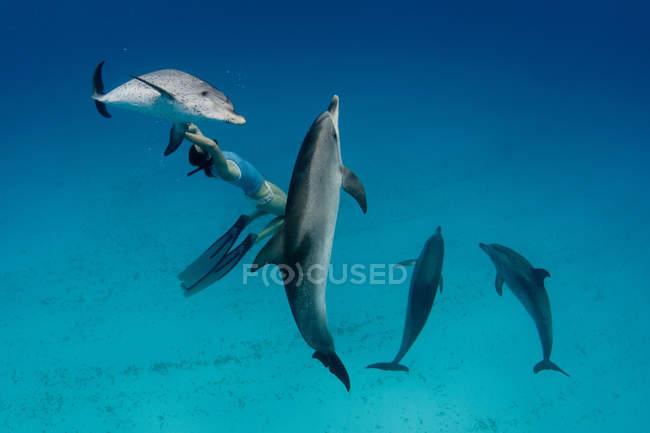 Снорклингом, плавание с дельфинами — стоковое фото