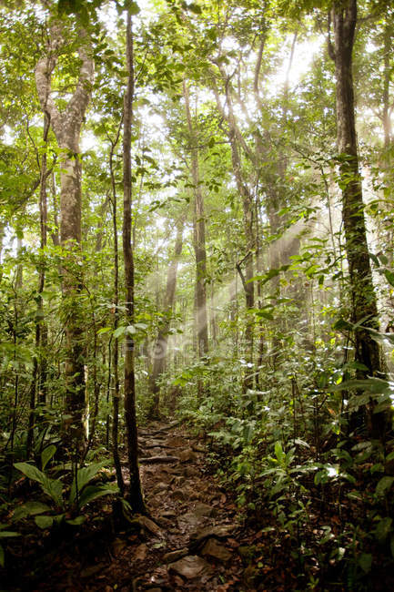 Jungle on approach towards Angel Falls — Stock Photo
