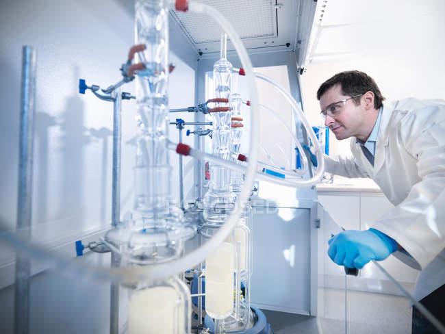Científicos masculinos en laboratorio, inspeccionando todavía experimento en el armario fume. - foto de stock