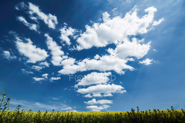 Clouds over grassy rural landscape — Stock Photo
