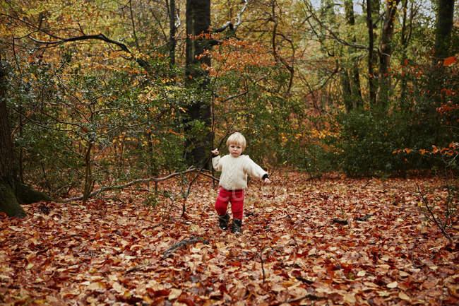 Малыш, ходить в осенние листья — стоковое фото