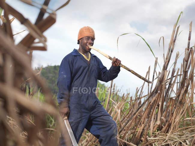 Trabalhador comendo a cana de açúcar — Fotografia de Stock