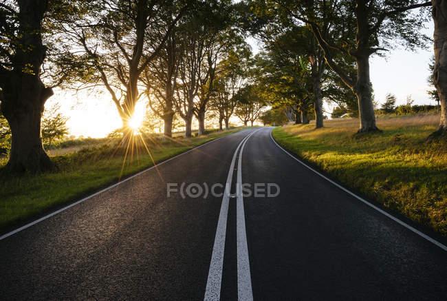 Árvores iluminadas pelo sol estrada rural — Fotografia de Stock