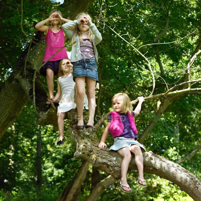 Девушки играют с телескопами на дереве — стоковое фото