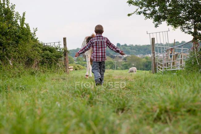 Вид сзади мальчик выпаса коров в поле — стоковое фото