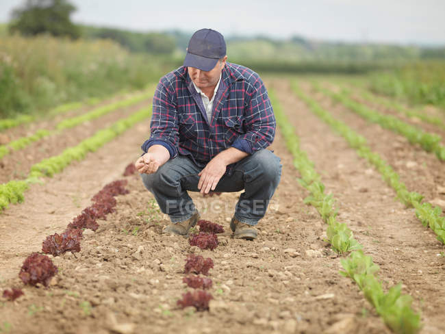 Farmer Tending Crops In Field — Stock Photo