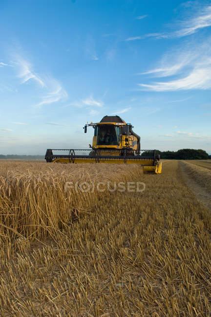 Harvester travaillant dans le domaine de la culture — Photo de stock