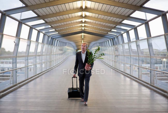 Businessman wheeling luggage with plant in hand — Stock Photo
