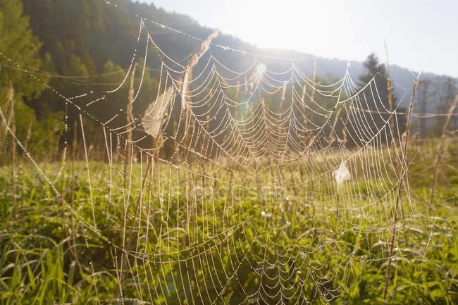 Spider web in field — Stock Photo
