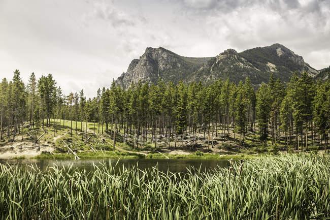 Vista através do lago Greenough — Fotografia de Stock