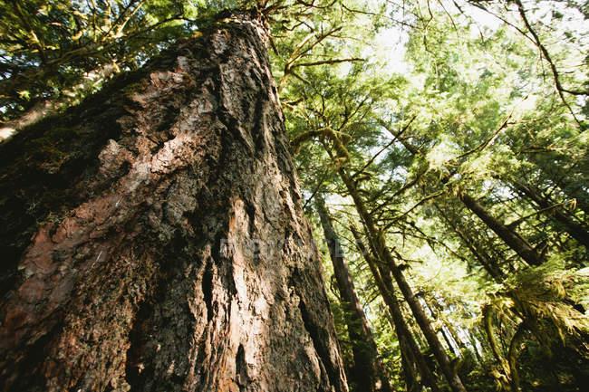 Вид деревьев в лесу — стоковое фото