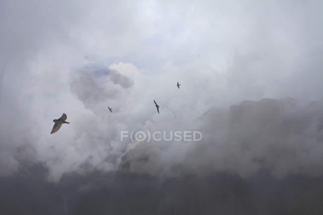Swallows flying above mountain tops, Machu Picchu, Peru — Stock Photo