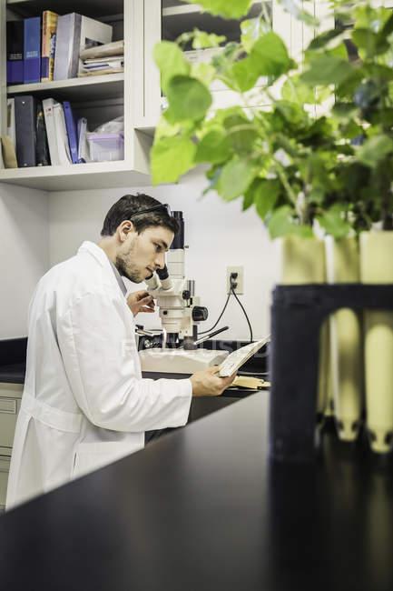 Wissenschaftler suchen Mikroskop in Pflanze Wachstum Forschungslabor Zentrum — Stockfoto