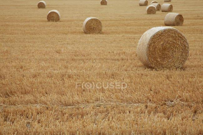 Belles balles sèches de foin dans le champ pendant la récolte — Photo de stock