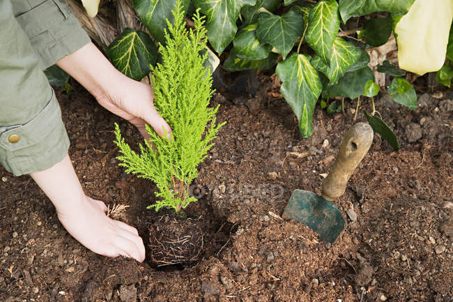 Woman planting a small tree — Stock Photo