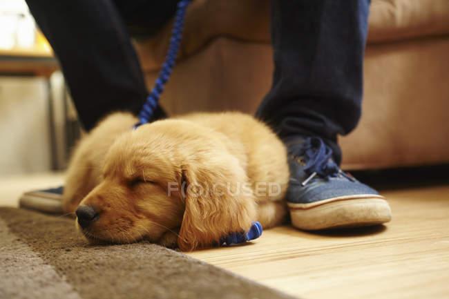 Labrador cucciolo dormire sul pavimento vicino piedi uomo — Foto stock