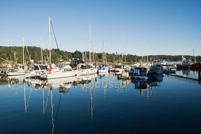 Boats moored in marina — Stock Photo