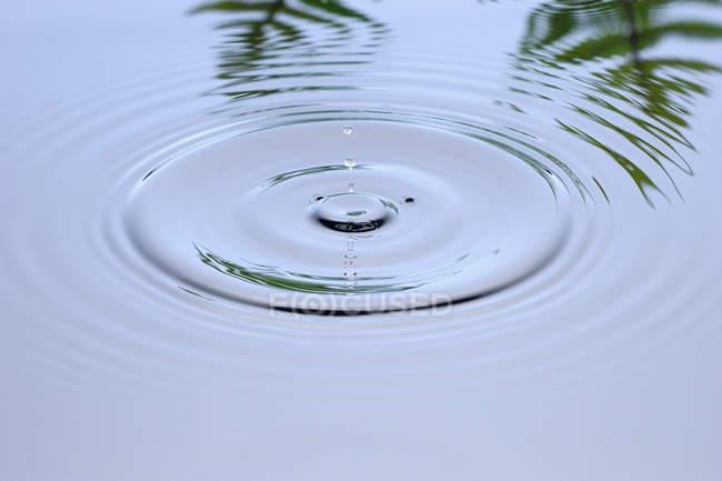 Брижі на воді з пальмовим листям, що відображають у водній поверхні — стокове фото