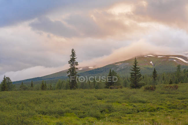 View of forest and mountains under cloudy sky at dawn — Stock Photo