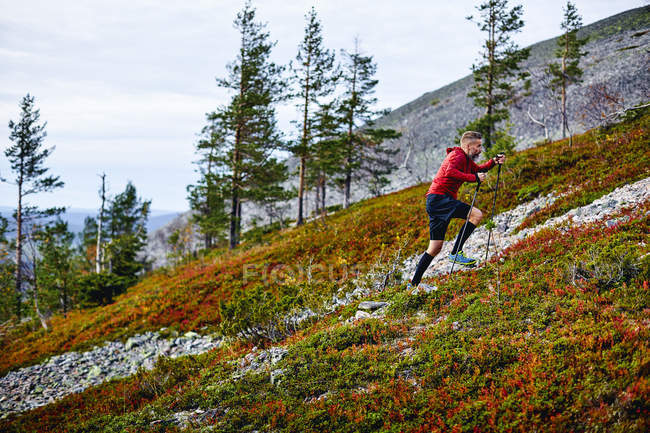 Hiker climbing up the hill with trekking poles, Lapland, Finland — Stock Photo