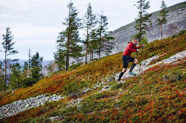 Caminhante que escala acima o monte com bastões trekking, Lapland, Finlandia — Fotografia de Stock