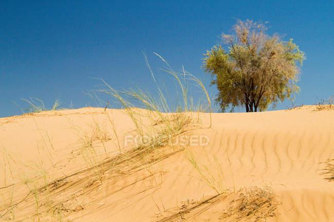 Dunes de sable au désert du Kalahari — Photo de stock
