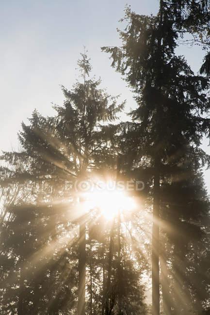 Lumière du soleil à travers les arbres — Photo de stock