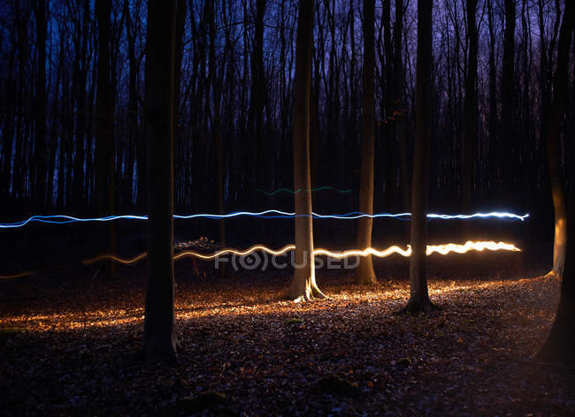 Forest illuminated at night — Stock Photo