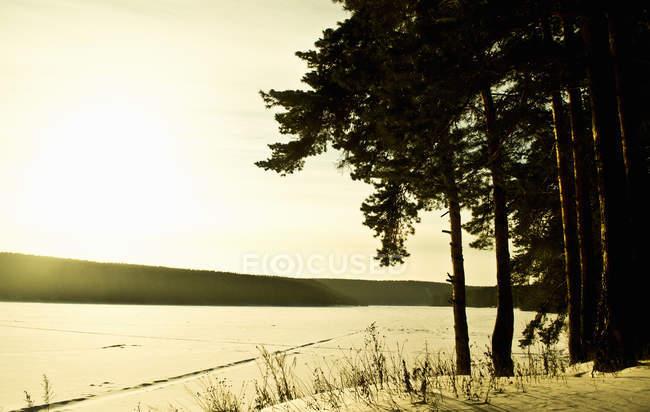 Деревами поблизу заморожені озера — стокове фото