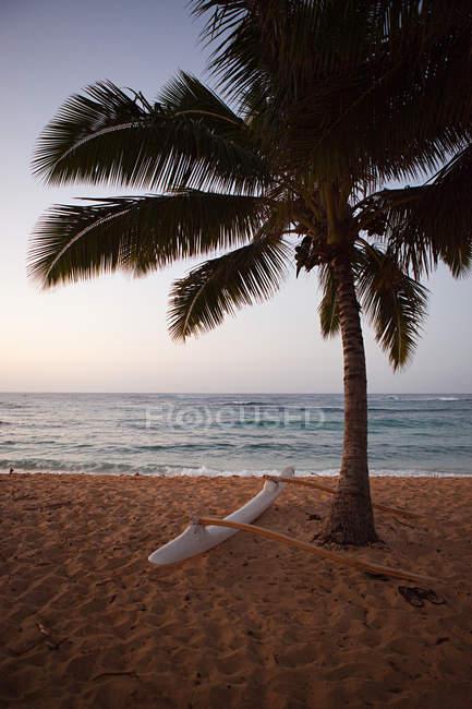 Canoa Outrigger e palma — Foto stock