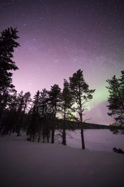 Siluetas de pinos en el cielo estrellado con luces boreales - foto de stock