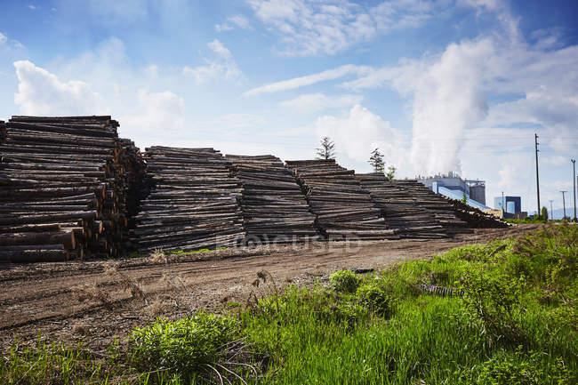 Rangées de bois empilés dans la cour à bois — Photo de stock