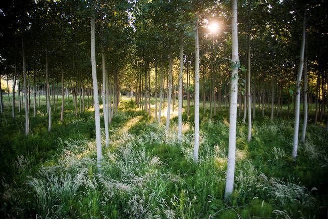 Young green trees and grass in forest with sunlight — Stock Photo