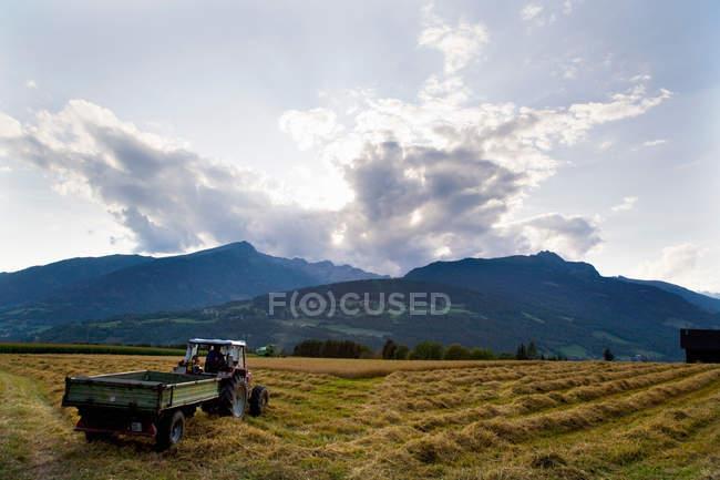 Agriculteur sur le tracteur de récolte d'avoine — Photo de stock