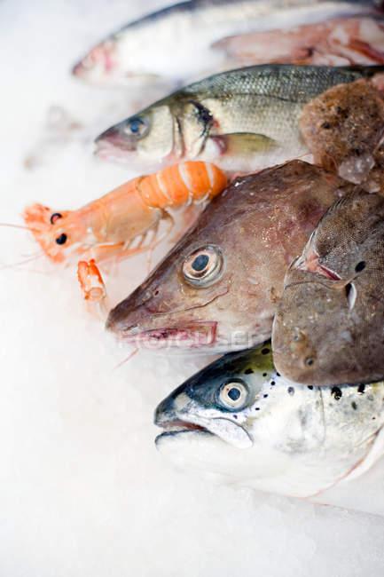 Выбор рыбы на льду — стоковое фото
