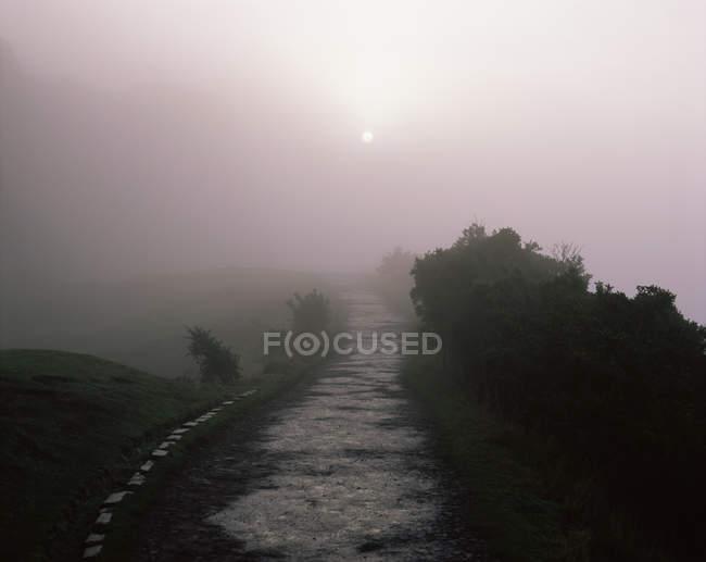 Nebel Weg — Stockfoto