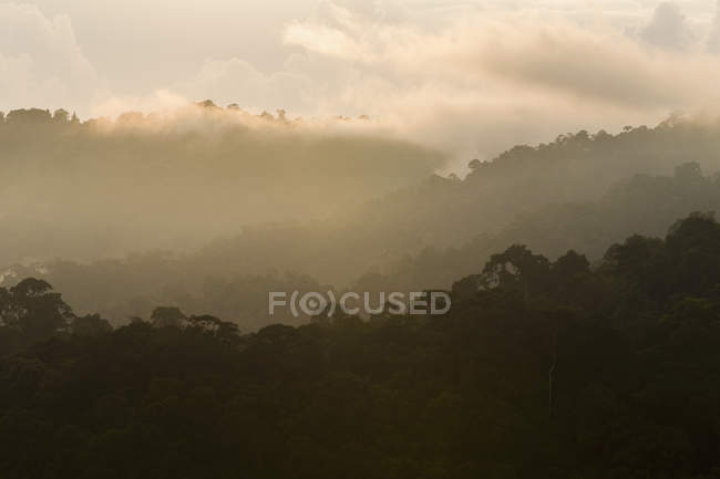 Growth silhouettes and low clouds, Khao Sok National Park — Stock Photo