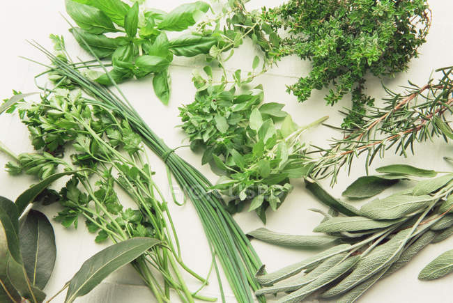 Variety of fresh picked herbs on white surface — Stock Photo