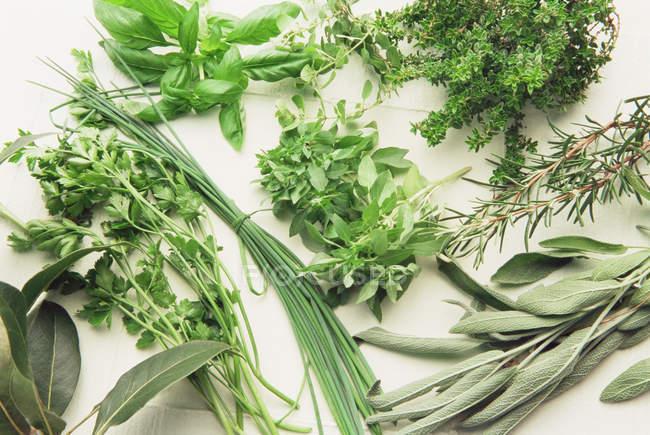 Variété de fines herbes cueillies sur la surface blanche — Photo de stock