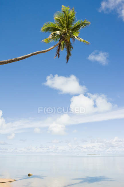 Пляж и одной пальмы — стоковое фото